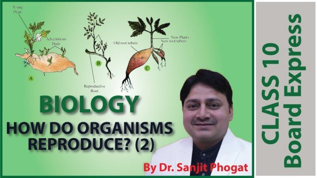 Board Exams Class10: Biology Important Questions / Notes: Topic- How Do Organisms Reproduce? (2)