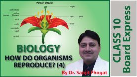Board Exams Class10: Biology Important Questions / Notes: Topic- How Do Organisms Reproduce? (4)